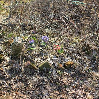 Старое кладбище Таганрога. Без о/з